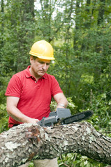 contractor tree surgeon chain saw