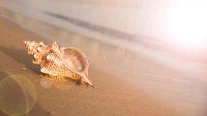 Sea shell on beach