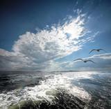 Fototapety The White sea.