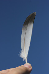 Feather in the hand on sky background