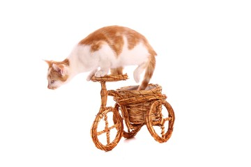 junge Katze fährt Fahrrad