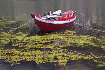 Douros River Boat
