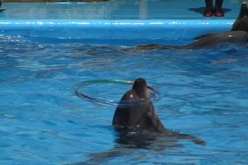 Dolphin Hula Hoop.