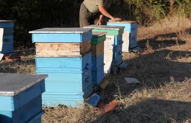 Beekeeper inspecting bees