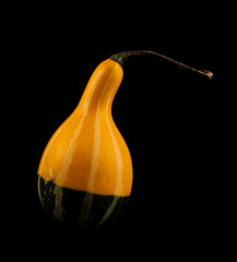 Ripe pumpkin fruits isolated on balck