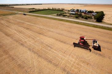 Harvest and Farm