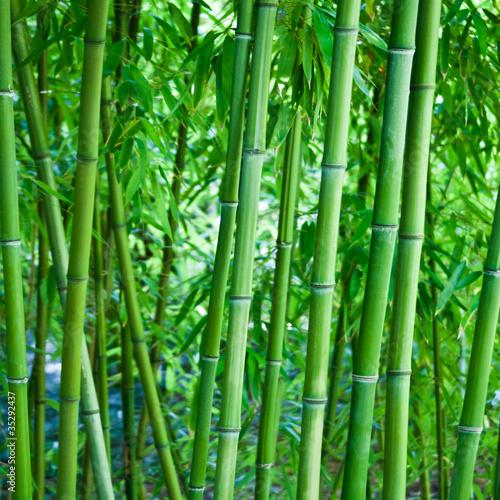 fototapete bambus bambusgew chs hintergrund wellness massage pixteria. Black Bedroom Furniture Sets. Home Design Ideas