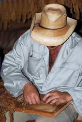 Man Rolling a Cigar.