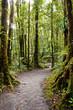 Trail Through Rain Forest