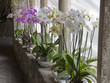 orchids in a cloister