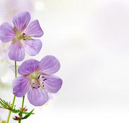 lovely purple flowers background