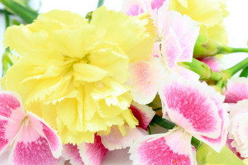 Carnation and Dianthus / Gift Flower