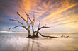 Folly Beach Tree Driftwood Ocean Sunset Charleston SC