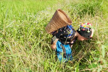 asiatisches Mädchen im Reisfeld