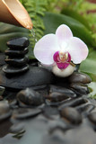 Fototapety une orchidée