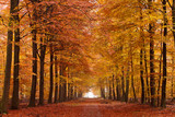 Fototapety Sand lane with trees in autumn