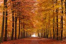 Zand laan met bomen in de herfst