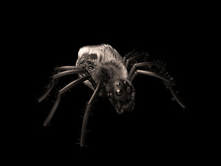 horror spinne gruselig