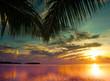 Fototapeten,hintergrund,sonnenaufgang,wald,urwald