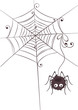 Funny hairy spider