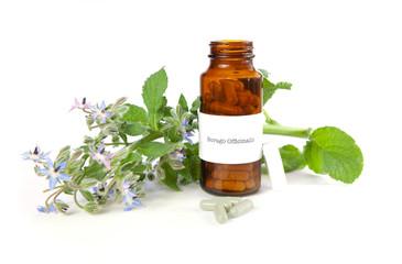 Borage herbal medicine