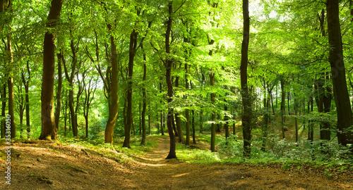 Fotobehang Bossen Waldweg im Sommer