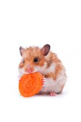 red hamster on white