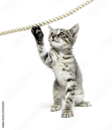 Cute tabby kitten playing with rope