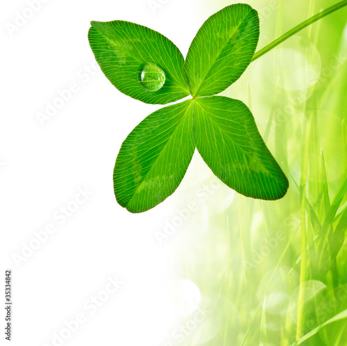 four leaf clover and grass border
