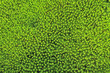 Moss green background