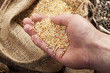 Getreide und Körner in der Hand