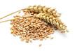 Weizen Ähren und Körner isoliert auf weiß