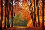 Fototapety Autumn park in oil painting style