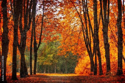 jesienny-park-w-stylu-malarstwa-olejnego