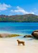 Island Ocean Landscape