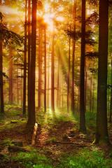 Forêt féérique