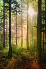 Forêt féérique © Chlorophylle