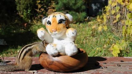 Бурундук (chipmunk): тигрёнок, подвинься!