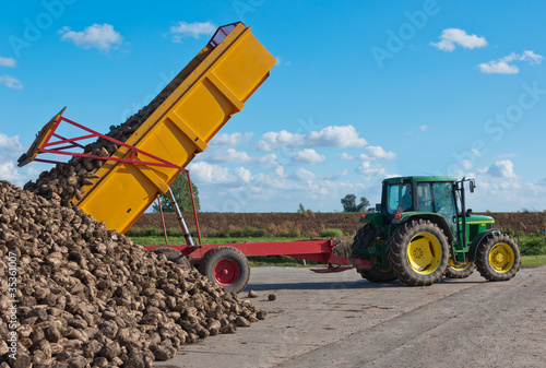 A tipper dumps a load of harvested sugar beets at a pile.