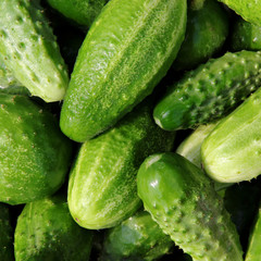 Fresh small cucumbers for sale at market.