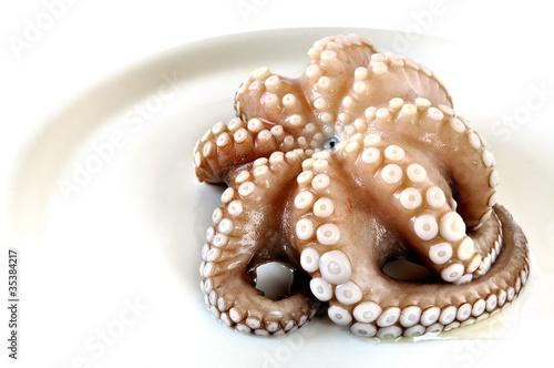 Leinwanddruck Bild Raw octopus