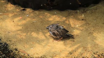 Fallen Finch