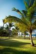 Palmiers de la plage de Grande-Anse - Réunion