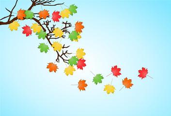 liście jesienne