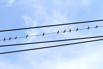 Electric wire and swallows