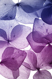 Fototapety colorful flower petal closeup