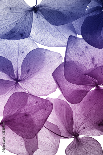 Keuken foto achterwand Lilac colorful flower petal closeup