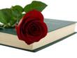 Red rose in a book