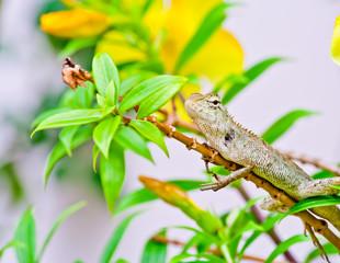 lizard climbing on branch of plant