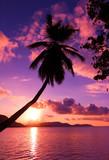 Island Pink Paradise - 35427890
